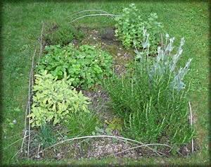 Plantes Amies Et Ennemies Au Potager : les plantes aromatiques au potager ~ Melissatoandfro.com Idées de Décoration