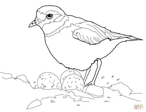 Piping Plover With Eggs In Nest Coloring Page Free