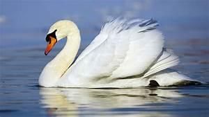 Animals, Birds, Creatures | Wild Life & Sea Side ...