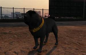 Play as Different Animals in GTA 5's New Hallucinations ...