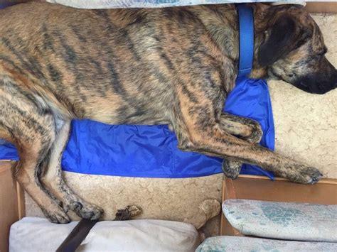 kuehlmatten fuer hunde im test  der grosse vergleich