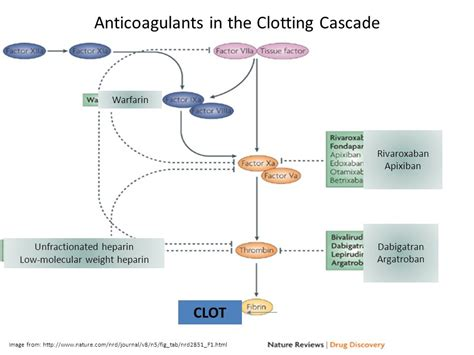 Anticoagulation And Associated Disorders