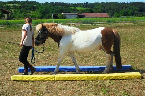 erziehungstraining bodenarbeit pro pferdcom ines