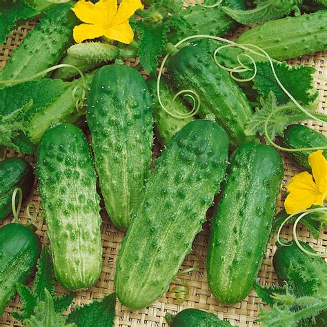 Your Cucumbers' Best Friends  Official Blog Of Park Seed