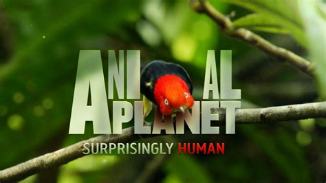 Animal Planet Live Wallpaper - animal planet logo hd