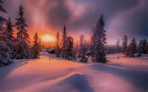 Sunset Forest Winter Landscape