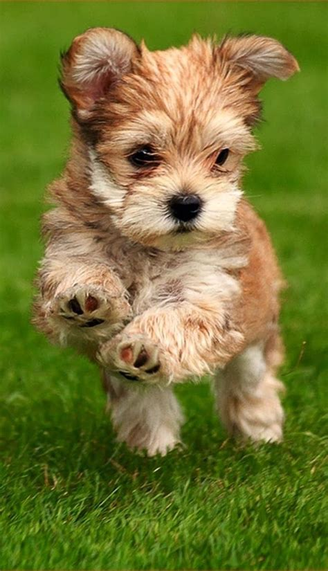 fluffiest puppies       cute cutest