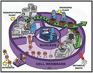 Love This Drawing  A Simplified Illustration Of Cell Metabolism  Depicting The Cell As A Factory