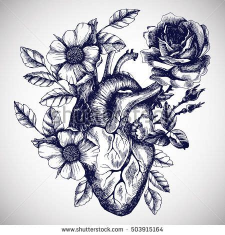 blooming anatomical human heart vector hand drawn illustration  vintage style design