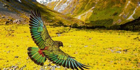 prerowzingstwieck bewegende naturbilder oz ostsee