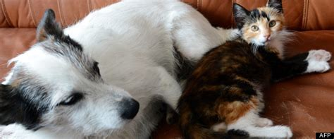 esp 233 rance de vie des chiens et des chats nos animaux de