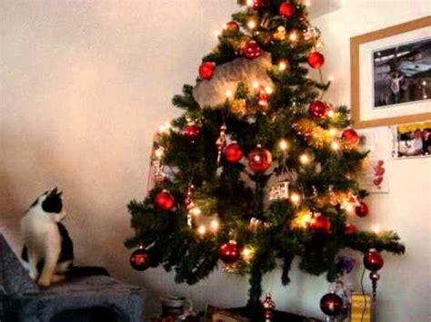 katzen im weihnachtsbaum youtube