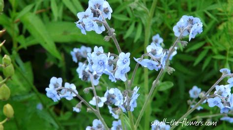 light blue flowers meaning of flower colors smell the flowers