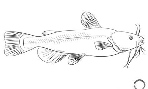 kumpulan gambar mewarnai ikan contoh sketsa