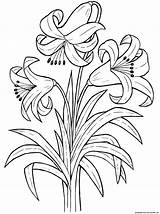 Lily Flowers Plants Coloring Pages Flower Colorator sketch template