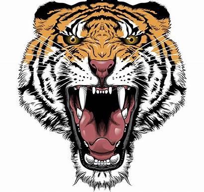 Tattoo Designs Tattoos Tiger Stencil Flash Crazy