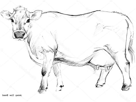 cow pencil drawing cow pencil sketch pencil and in