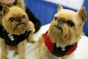 images from the 140th westminster kennel club dog show
