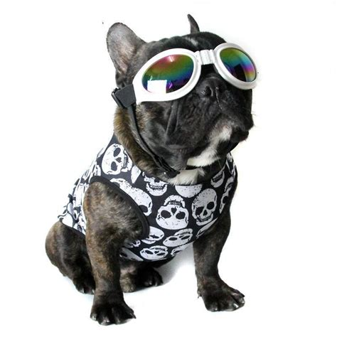 french bulldog clothes     frenchie shop