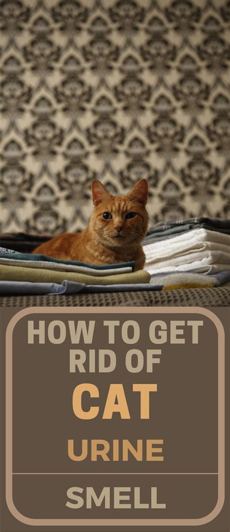 rid  cat urine smell topcleaningtipscom