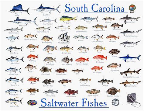 catch  kinds  fish  myrtle beach www