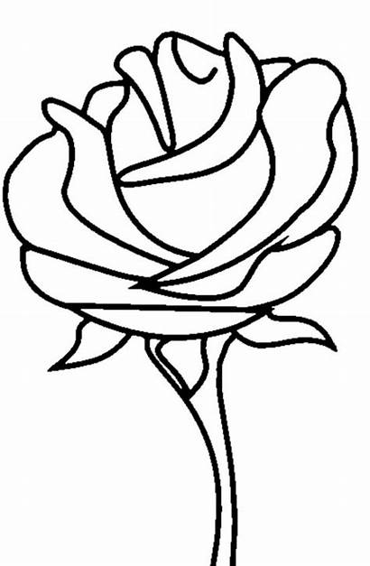 Pages Coloring Rose Roses Printable