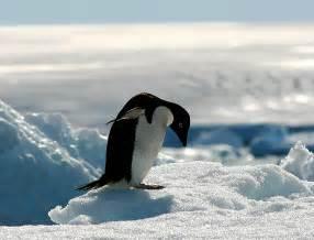 南極:南極海保護を求める市民の声を届けよう!(FOE) | Finance GreenWatch