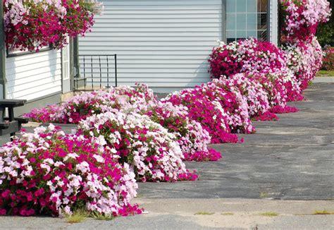 Best 25+ Flower Bed Designs Ideas On Pinterest