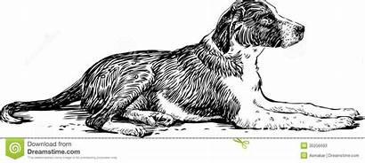 Cane Menzogne Disegno Liggen Hond Het Randagio