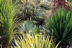 Plantes Exotiques Rustiques : yuccas rustiques pour une ambiance exotique jardins de ~ Melissatoandfro.com Idées de Décoration