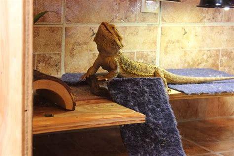 bearded dragon enclosure