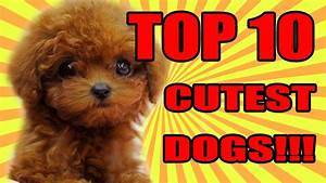 TOP 10 CUTEST DOGS 2016 / 2017 | FunnyDog.TV
