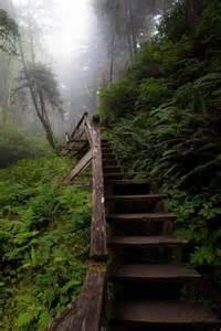 British Columbia Canada Forest