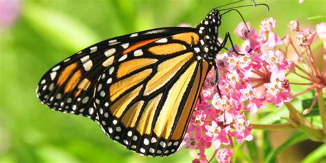 A Farewell To Kings? New Ideas On The Vanishing Monarch