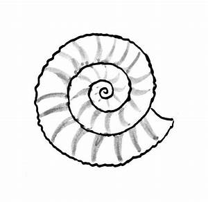 Shell Drawing - ClipArt Best