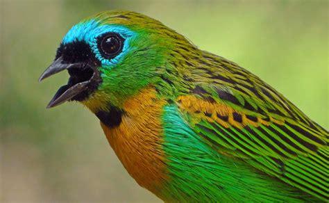 bird sounds brazilian birds and sounds 3 youtube