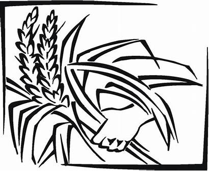Coloring Grain Cereal Pages Grains Rice Drawing