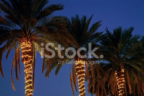 festive decorated palm trees stock photos freeimages com