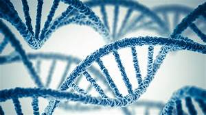 Whole Genome Scans Aren U0026 39 T Quite Ready For Your Doctor U0026 39 S