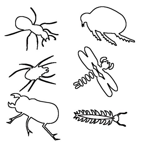 insect coloring pages  children