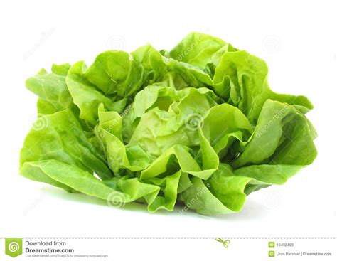 Lettuce Clipart Clip Leaf Lettuce Clipart Clipart Suggest