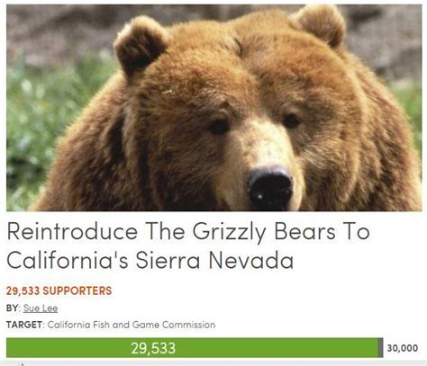 California Grizzly Bear