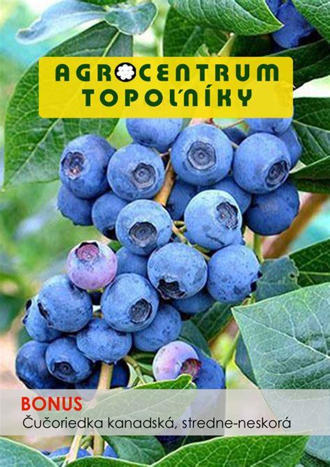 Uoriedka, bonus, Vaccinium corymbosum, kont