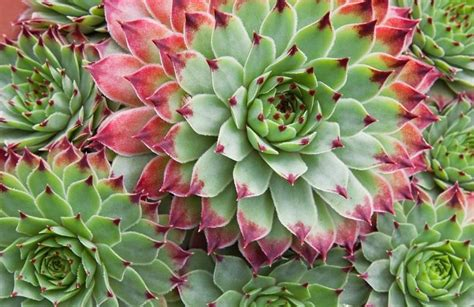 Succulent Care: Why Are Leaves Falling Off My Succulents - OrchidRepublic