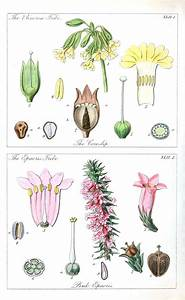50 Best Botanica  Arthur Harry Church Images On Pinterest