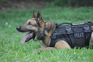Photos: Police dogs in West Palm Beach, Jupiter, Boca Raton