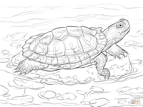 Red Eared Slider Coloring Page Free Printable Coloring Pages