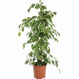 Plantes à Suspendre : jardins bleus plantes vertes ~ Premium-room.com Idées de Décoration