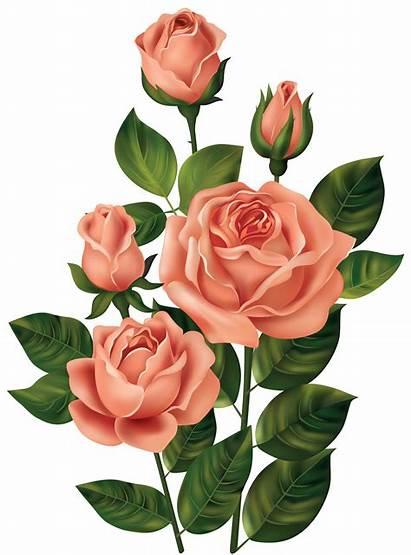 Rose Clipart Transparent Flowers Roses Clip Decoupage