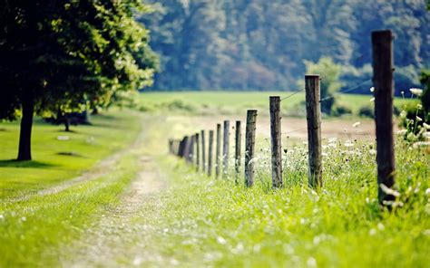 nature fence fencing meadow grass green tree foliage
